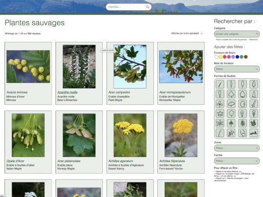 Index visuel des fleurs sauvages en Provence